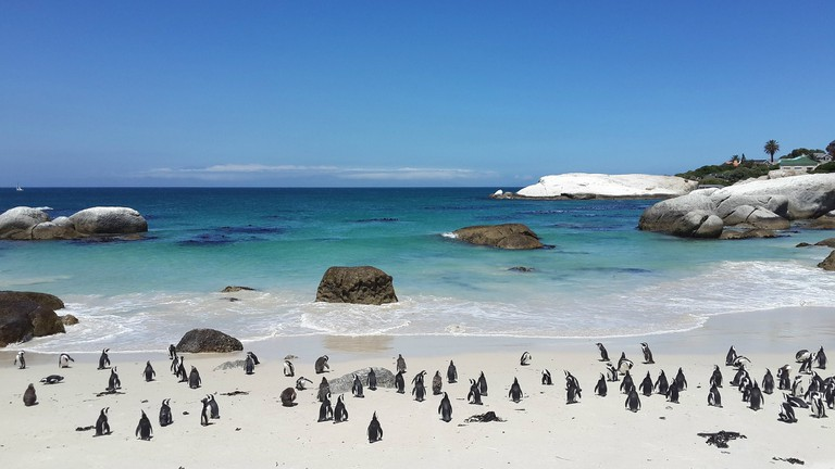 penguins-857206_1920