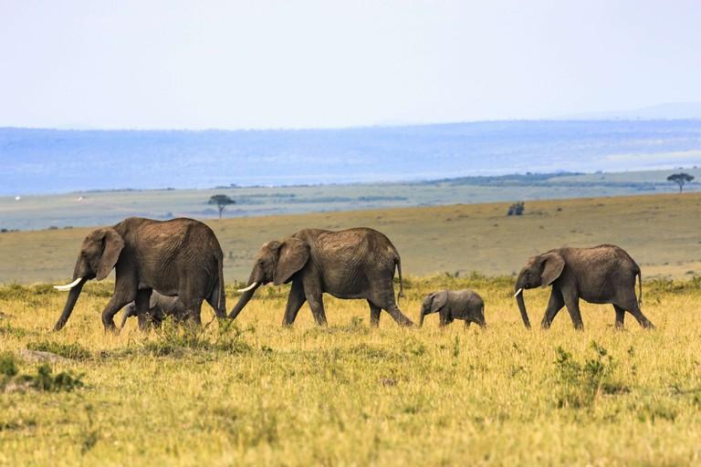 Poaching_herd of elephants