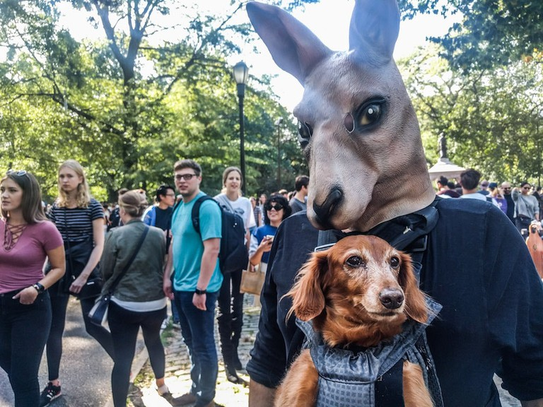 Halloween Dog Parade 2017 | © Amanda Suarez/Culture Trip