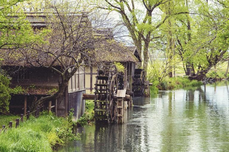 Daio Wasabi Farm, Azumino | © PhotoNN/Shutterstock