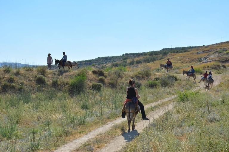 sebastia-donkey-tours-palestine_203 (426)