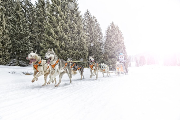 Dashing through the snow... |© freevideophotoagency / Shutterstock