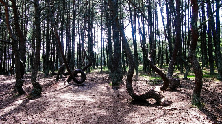 The Dancing Forest