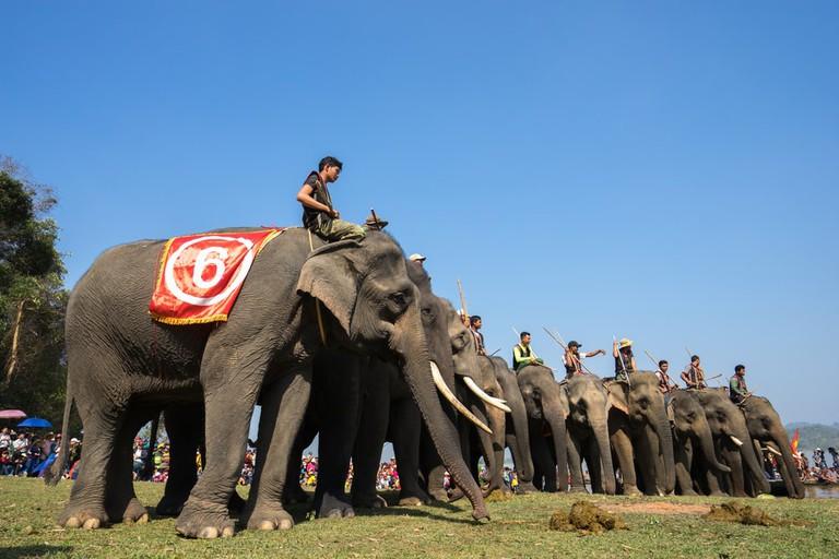 On your marks, get set... trample! | © Vietnam Stock Images/Shutterstock
