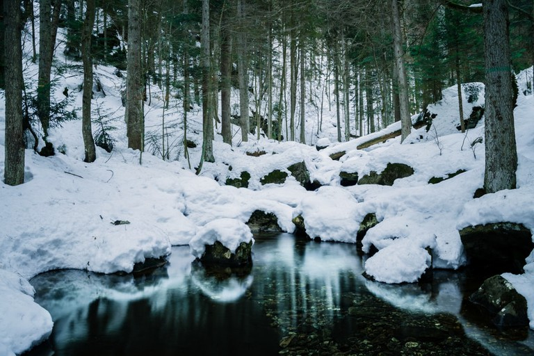 Small creek in the Bavarian Forest National Park