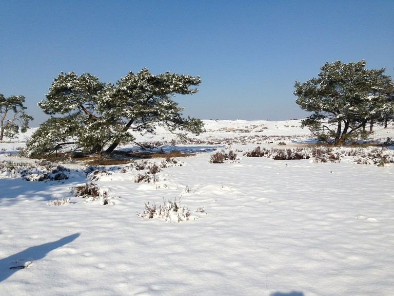 De Hoge Veluwe National Park after snowfall