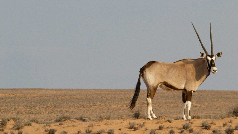 South-African-National-Parks_Kgalagadi