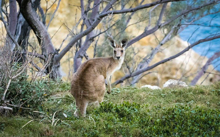 The-Safaris-You-Should-Go-On-that-Aren't-In-Africa_South-Australia