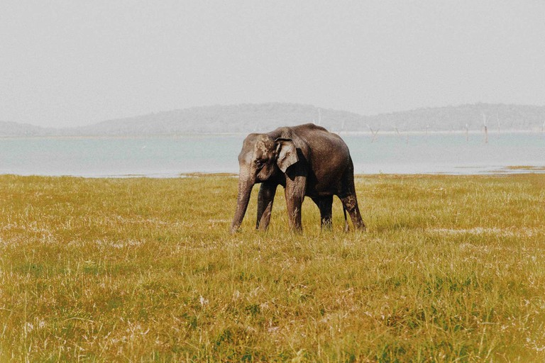 The-Safaris-You-Should-Go-On-that-Aren't-In-Africa_Sri-Lanka
