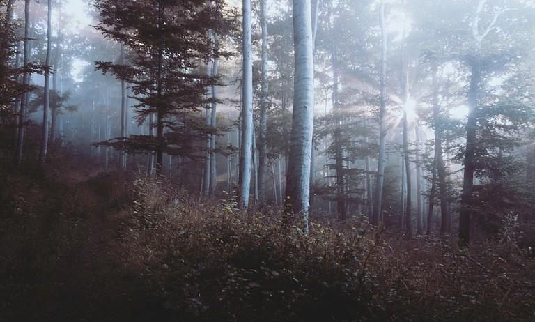 woods-918512_960_720