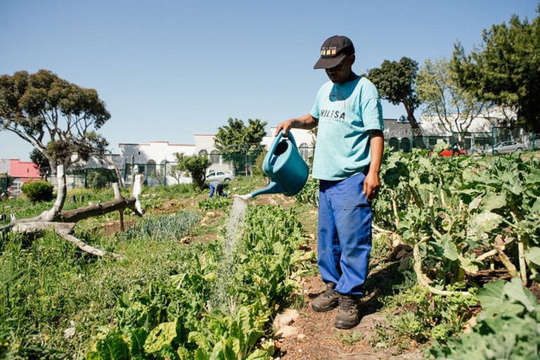 Watering the Streetscapes gardens