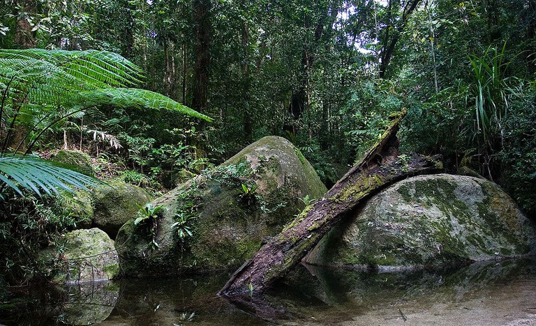 1024px-Daintree_National_Park