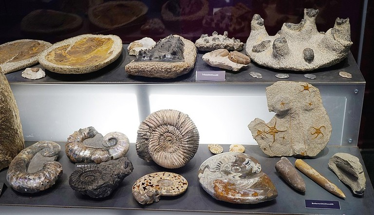 1024px-Tampere_Mineral_Museum_-_fossils_2