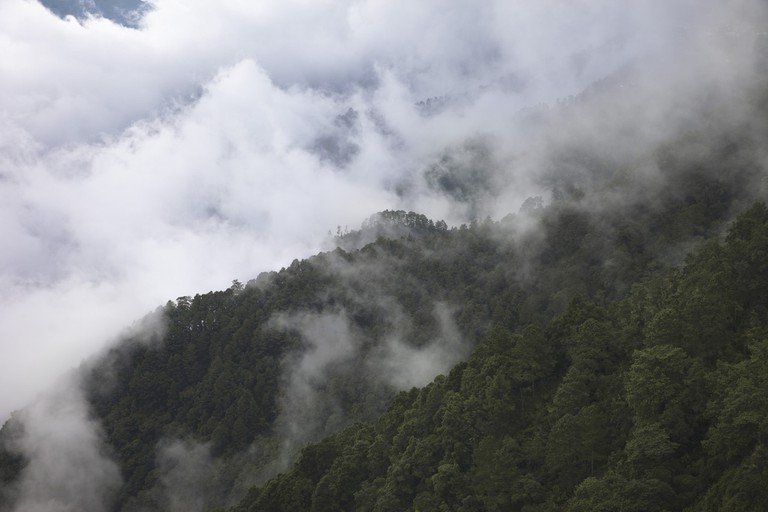 Sierra Juarez, the 'Cloud Forest, Oaxaca, Mexico | © Chris Ford/Flickr