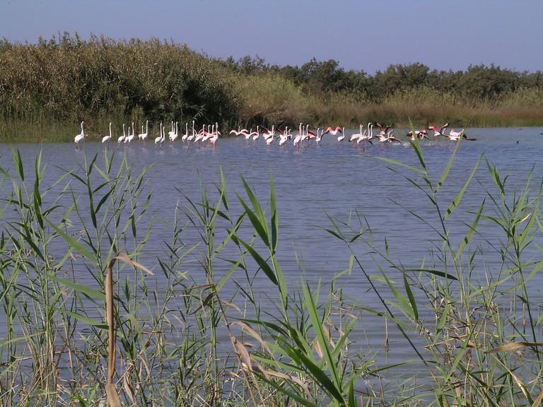 Sous-Massa National Park