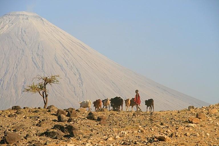 Masaai boy herding cattle