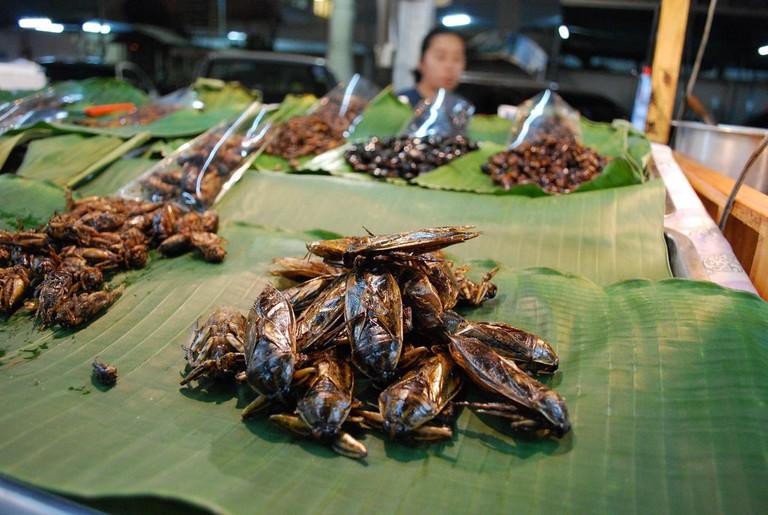 Giant water bug | ©Alpha/Flickr