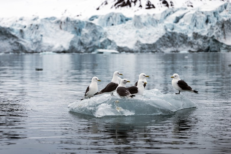Birds on floating ice | © Christopher Michel /Flickr