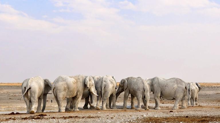 Namibia's desert adapted elephants