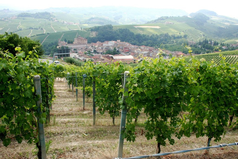 Barolo vineyard in Piedmont | © Megan Cole/Flickr