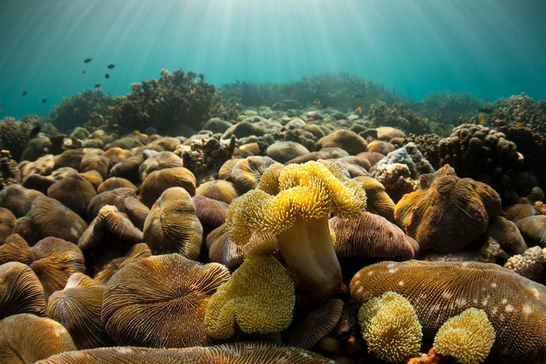 Coral-of-Mergui-Archipelago-Myanmar