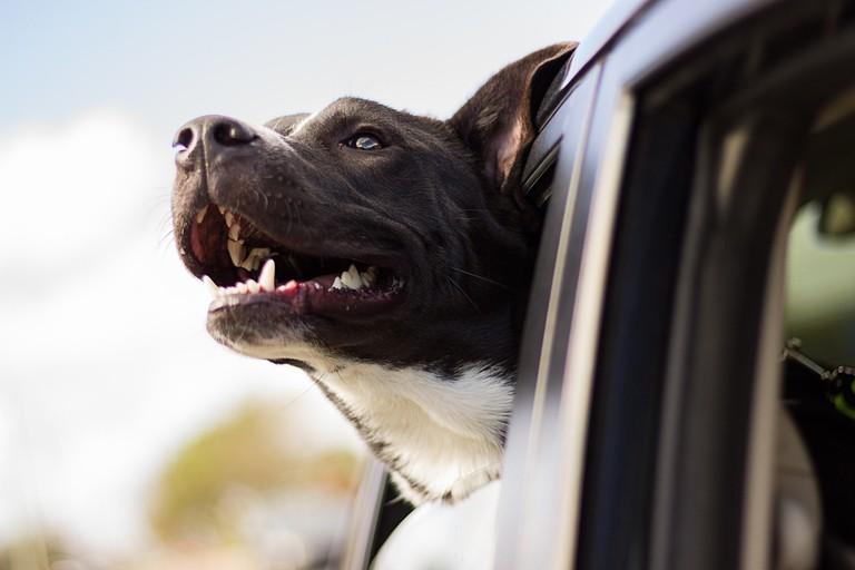 dog-1149964_1280