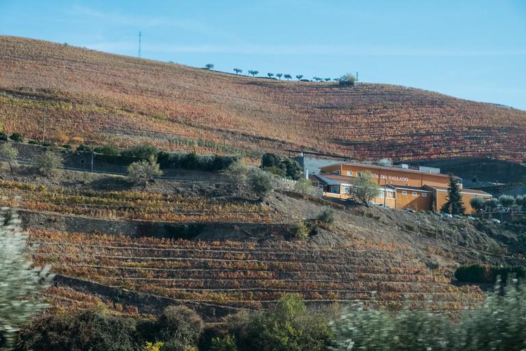 DSCF2827 - WATSON - DOURO, PORTUGAL- QUINTA DO VALLADO