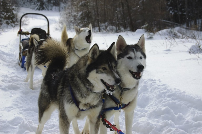Dog sledding in Ushuaia