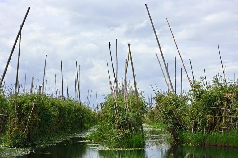 Floating-Gardens-of-Inle-Lake-Myanmar