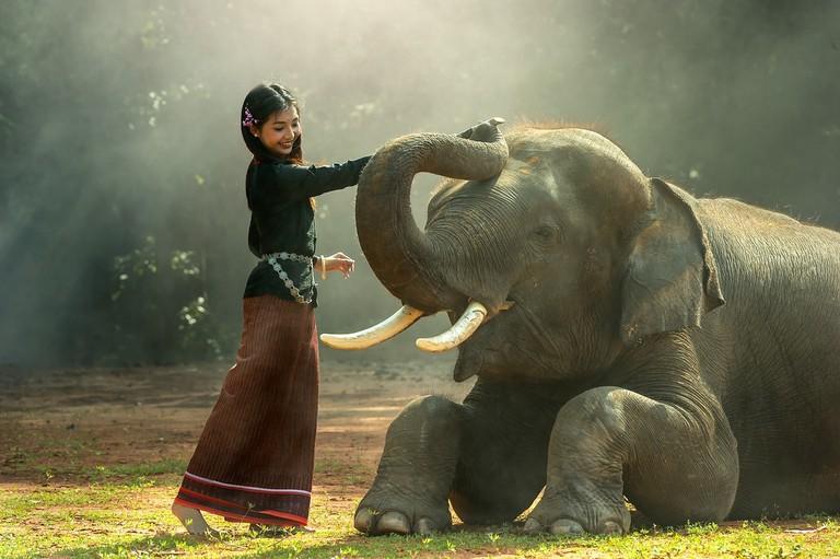 Elephant   ©Sasint/Pixabay