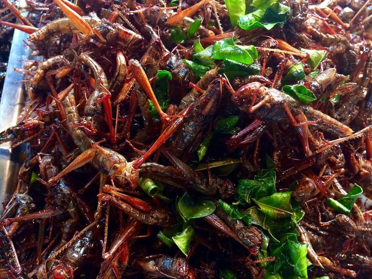 Grasshoppers | ©kai62/Pixabay
