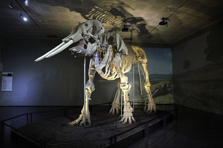 Kahramanmaras_Museum_Mammut