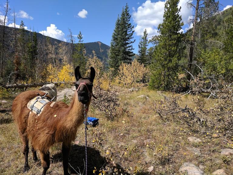 llama-hike