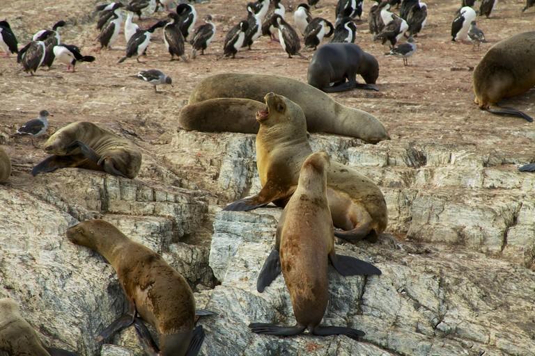 Sea lions and penguins in Tierra del Fuego