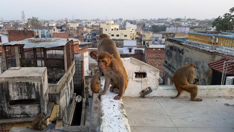 monkey-1096163_1920