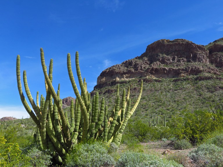 Organ Pipe Cactus National Monument | © Jeff Hollett / Flickr