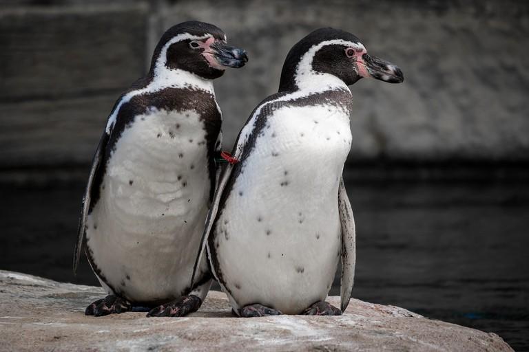 penguin-2910470_1280