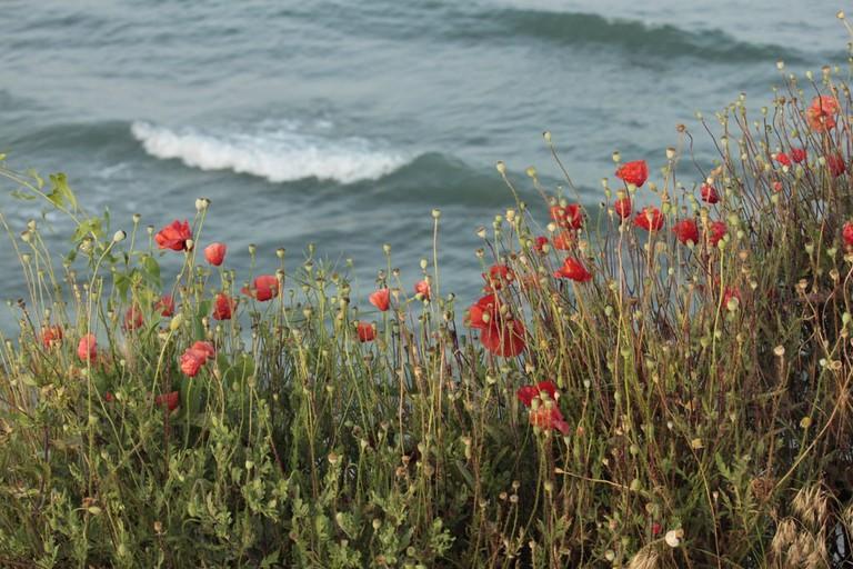 Wild flowers alongside the shore © Georgeta Gheorghe