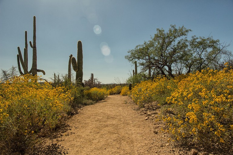 Saguaro National Park | © Shawn Hinsley / Flickr
