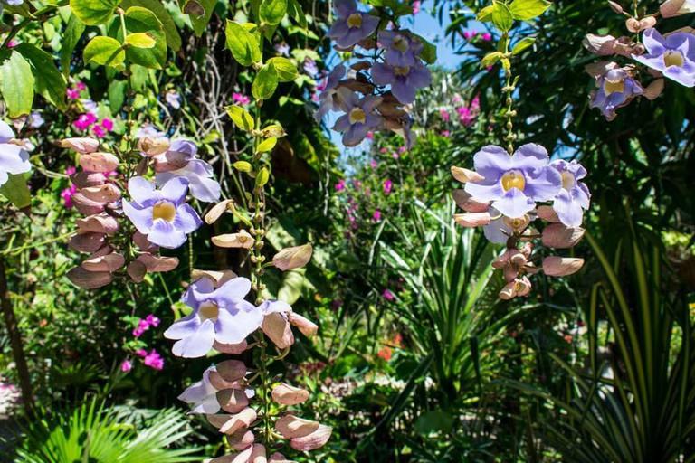 see-it-in-banrney-s-flower-hummingbird-garden-jamaica