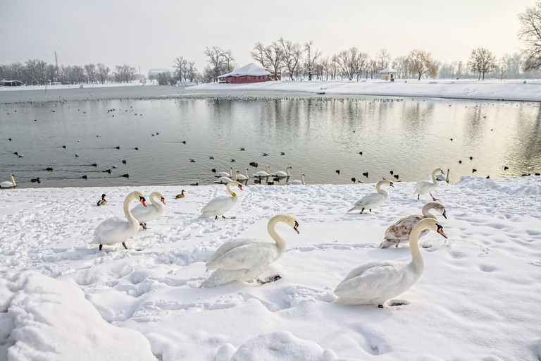 Lake Jarun, Zagreb | © OPIS Zagreb/Shutterstock