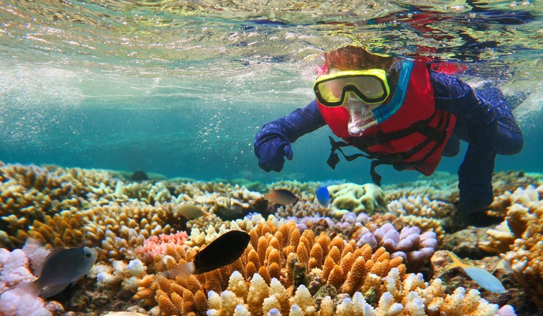 Snorkelling on the Great Barrier Reef, Australia | © ChameleonsEye/Shutterstock