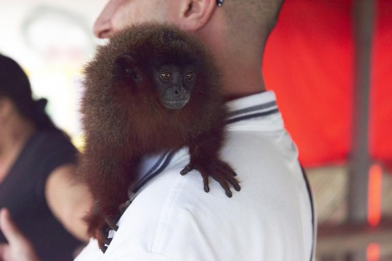 #MonkeySelfie |© Nando Machado / World Animal Protection