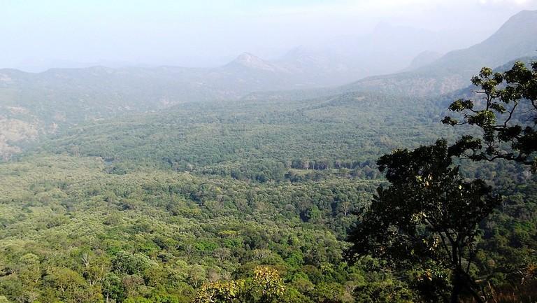 1024px-Anamalai_Tiger_Reserve_-_panoramio_(21) (1)