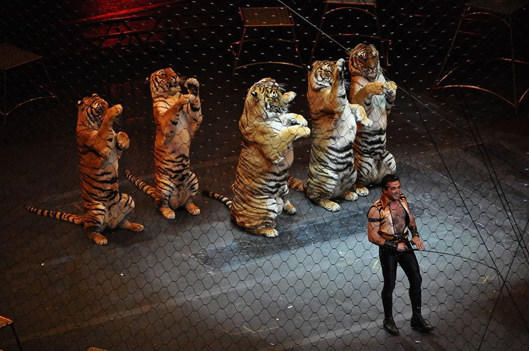 1024px-Ringling_brothers_over_the_top_tiger