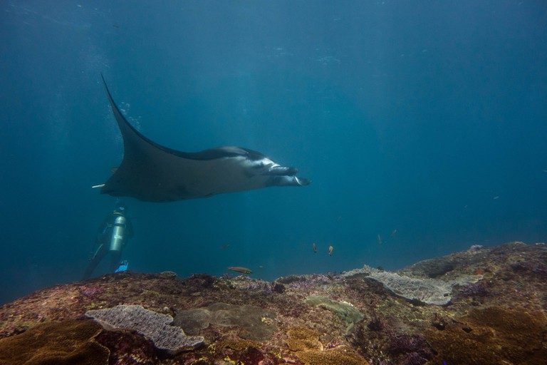 Diving with mantas   © Stef Bemba / Flickr