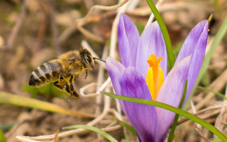 Vesna – spring in Croatia | © Dejan Hudoletnjak/Flickr