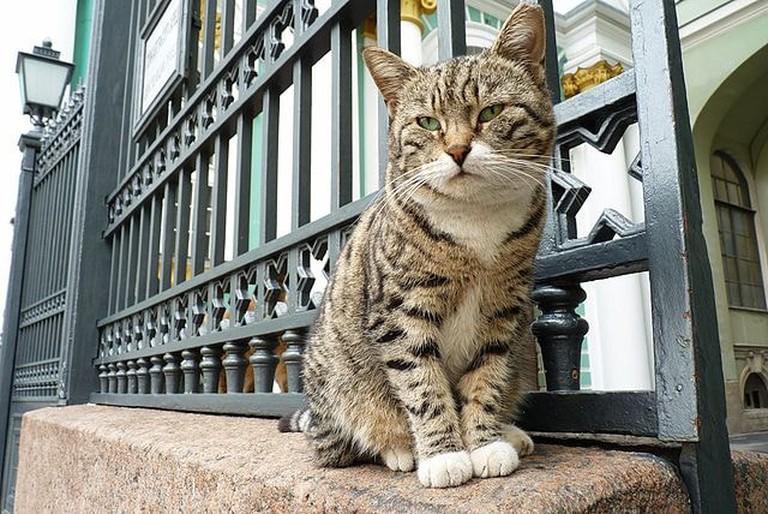 640px-Hermitage_cat