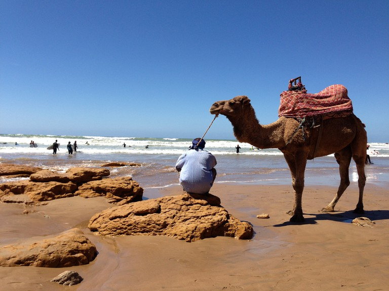 Camel in Agadir