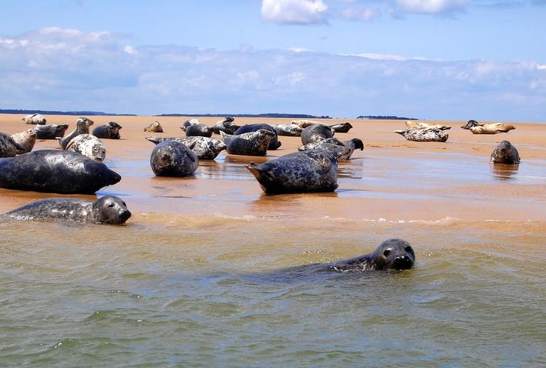 Blakeney Point Seals | ⓒ Dun.Can:Flickr